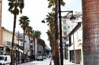 Prawda jak piękna staje się ulica obsadzona tymi palmami?