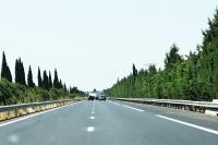 Od wieków wzdłuż dróg sadzono drzewa. Spełniają wiele ważnych funkcji. Oczywiście nie powinny utrudniać widoczności