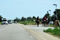 Gdy przy drodze jest pobocze, to właśnie nim poruszać się mogą jeźdźcy