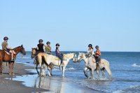 """Konie rasy camargue znane też jako """"siwe konie morskie"""""""