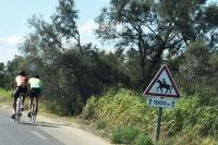 I kolejne znaki drogowe ostrzegające przed jadącymi wierzchem na koniach