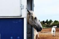 W regionie tym konie są bardzo popularną atrakcją turystyczną