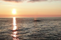 Jest też wieloryb. To dogodne miejsce życia tych wielkich ssaków