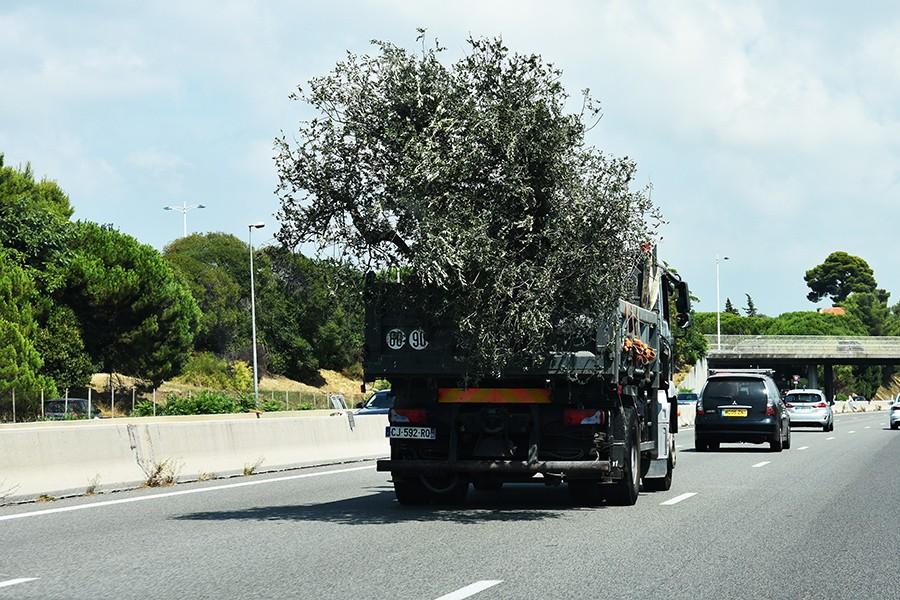 Priorytetem przy nasadzeniach drzew i krzewów powinno być bezpieczeństwo ruchu drogowego