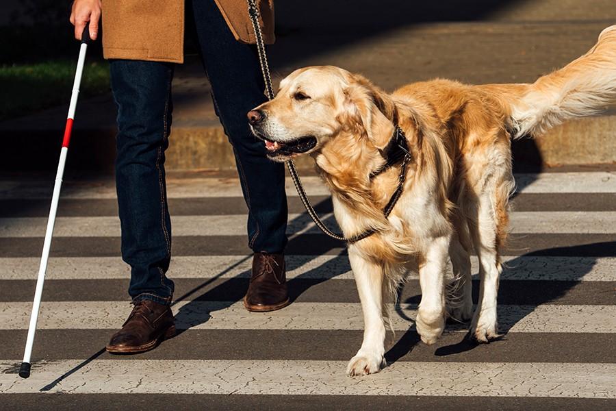 Niepełnosprawni piesi na szczególnych prawach