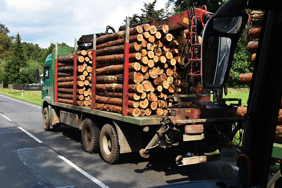 Nieprawidłowości w transporcie drewna