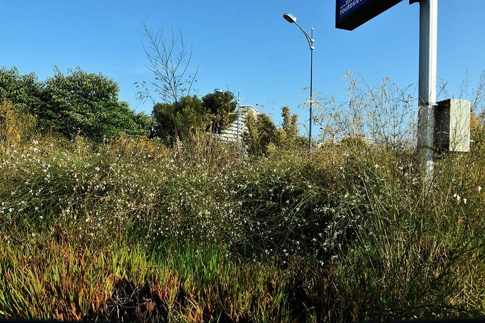 O niekoszeniu zieleni przy drogach