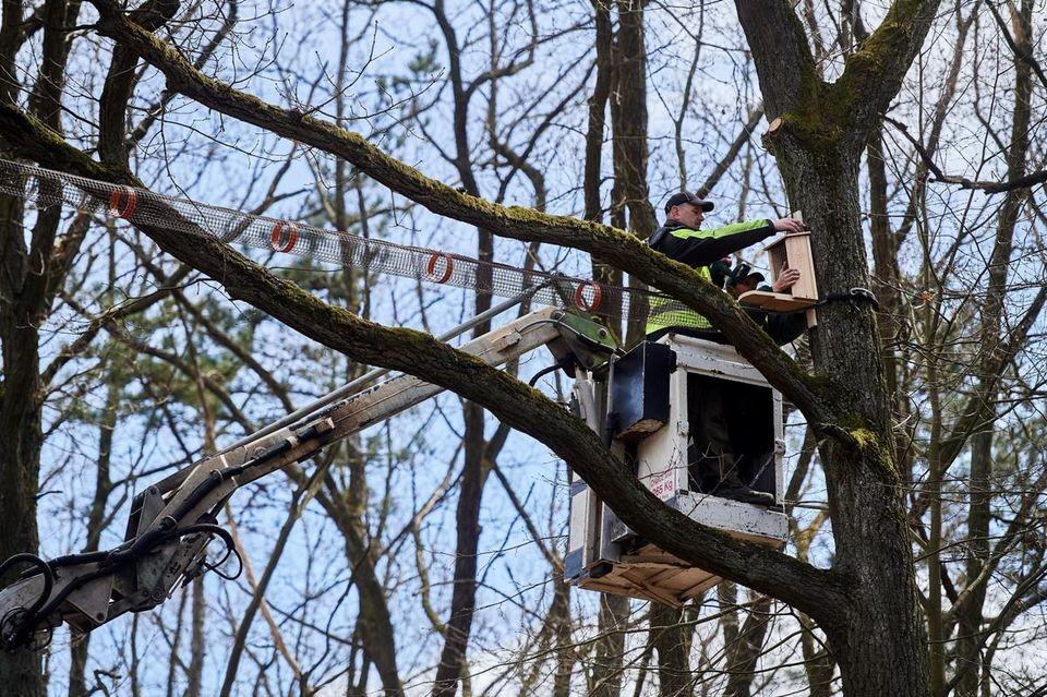 Mają to! Pierwszy w Polsce most wiszący dla wiewiórek