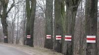 Może odblaski uratują drzewa?