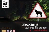 Zwierzęta giną przez nierozważnych kierowców