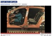 Przewożony pies zagrożeniem dla kierowcy