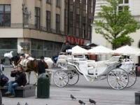 Krakowskie dorożki: historyczne, ale przede wszystkim bezpieczne
