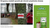Nasze przydrożne drzewa trzeba chronić, a nie wycinać