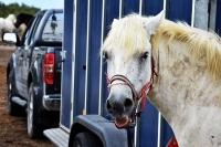 """Koń, pojazd, ruch drogowy oraz galeria pn. """"Wśród siwych koni morskich"""""""