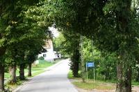 Wycinka drzew przydrożnych w informacji resortu infrastruktury